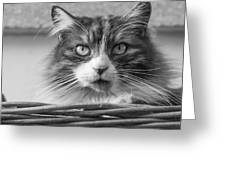 Eyecat Greeting Card