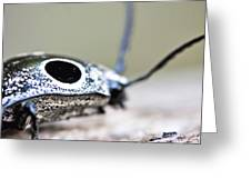 Eyed Click Beetle Greeting Card