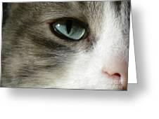 Eyes 2 Greeting Card