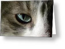 Eyes 3 Greeting Card