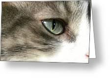 Eyes 4 Greeting Card