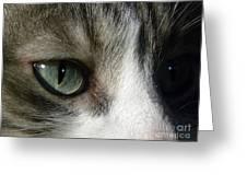 Eyes 5 Greeting Card