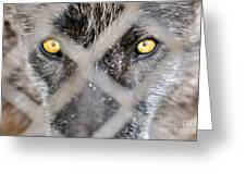 Eyes Behind The Fence Greeting Card by Dan Friend