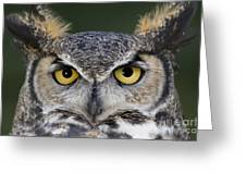 Eyes For You Greeting Card