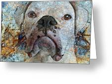 Eyes Front Greeting Card by Judy Wood