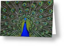 Eyes Have It Greeting Card