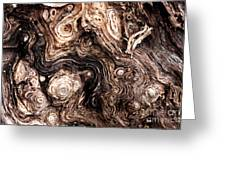 Eyes Of A Tree Greeting Card