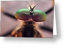 Eyes Of The Robber Fly Greeting Card