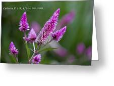 F2 Point 8 1 200th Sec Iso200 Greeting Card