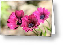 Fabulous Colour Greeting Card