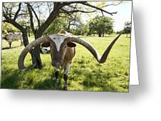 Fabulous Texas Longhorn Greeting Card