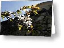 Facades And Fruit Trees - The Church And The Plum Greeting Card
