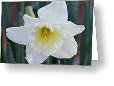 Face Of A Daffodil Greeting Card