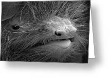 Face Of A Pipistrelle Bat Greeting Card