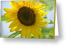 Face To Face With A Sunflower Greeting Card