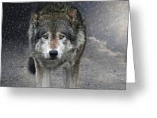 Face To Face With The Wolf Greeting Card
