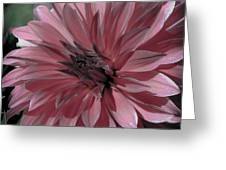 Faded Pink Dahlia Greeting Card