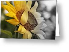 Faded Sunflower Greeting Card