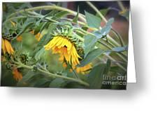 Fading Sunflower Greeting Card