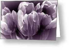 Fading Tulip Flowers Lavender Gray Monochrome Greeting Card