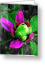 Fairy Bloom  Greeting Card