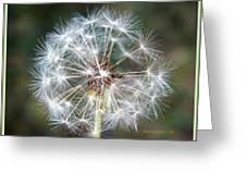 Fairy Umbrellas Greeting Card