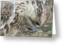 Bowing Falcon Greeting Card