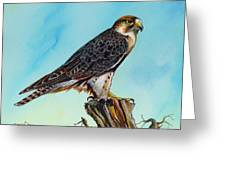 Falcon On Stump Greeting Card