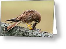 Falcon's Breakfast  Greeting Card