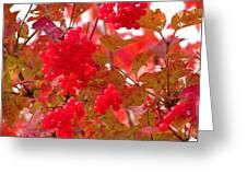 Fall 08-008 Greeting Card