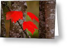 Fall Aflame Greeting Card