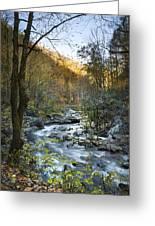 Fall Along Citico Creek Greeting Card