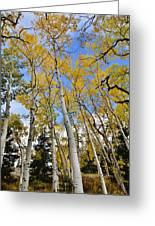 Fall Aspens  Greeting Card