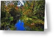 Fall At Kelly Park Greeting Card