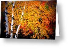 Dazzling Birch Greeting Card