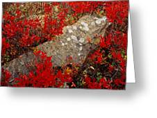 Fall Blueberries And Moss-h Greeting Card