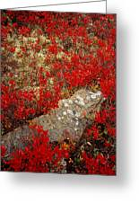 Fall Blueberries And Moss Greeting Card