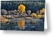 Fall Brilliance On Warm River Greeting Card