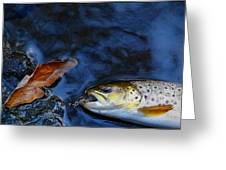 Fall Brown Trout Greeting Card