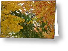 Fall Canopy Greeting Card