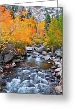 Fall Color Along Bishop Creek, Inyo Greeting Card