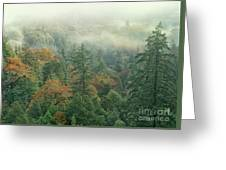 Fall Color And Fog Near Garberville California Greeting Card