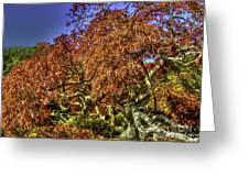 Fall Color At Biltmore Greeting Card