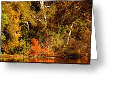 Fall Color Creekside Greeting Card