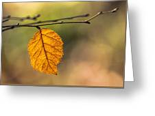 Leaf In Fall Color Greeting Card