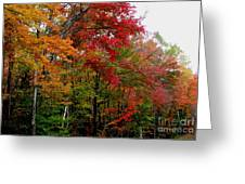 Fall Color Palette Greeting Card