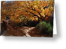 Fall Color Path Greeting Card