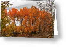 Fall Color Snow Storm Greeting Card