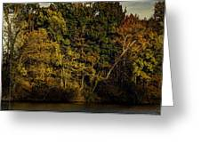 Fall Color Trees V8 Pano Greeting Card
