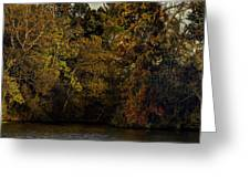 Fall Color Trees V9 Pano Greeting Card